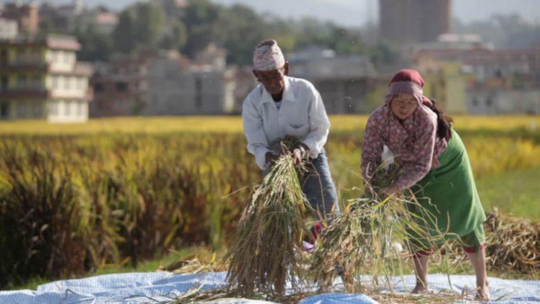 नेपाली कृषिः हिजो, आज र भोलि