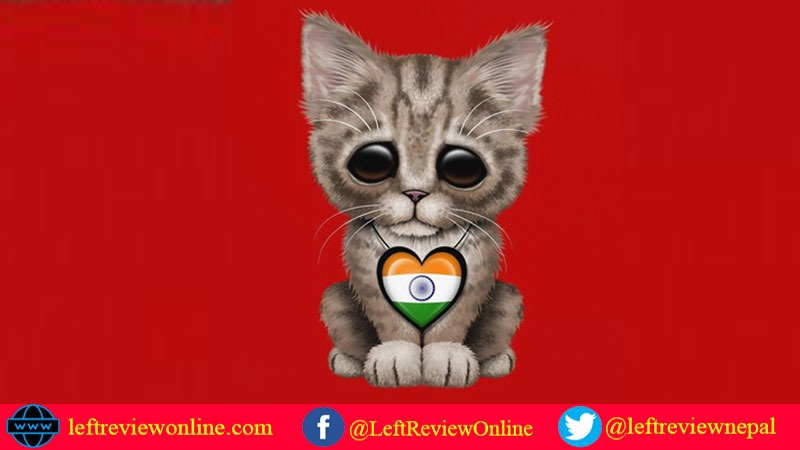 Cat with Indian flag